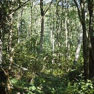 D'autres albums photos sur la nature du sud Isère et d'ailleurs :