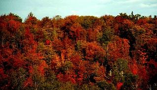 Canada: la nature se déguise à l'Automne d'une extrême beauté.....