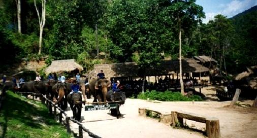 Thaïlande : La vallée de Maesa,le dressage des éléphants