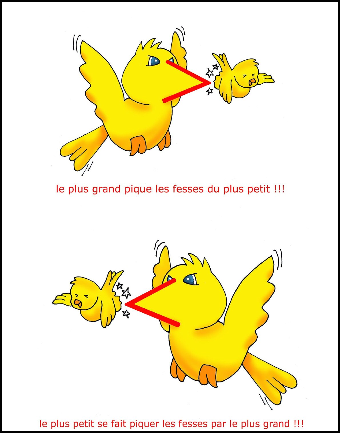 image oiseau comparaison