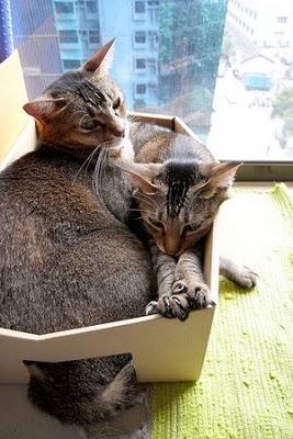 Chats en boite...suite